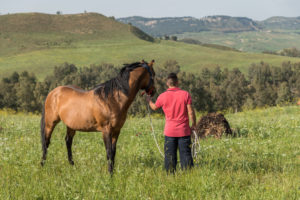 horse, man, Enna, Sicily, human, animals, countryside, nature, landscape, Italy