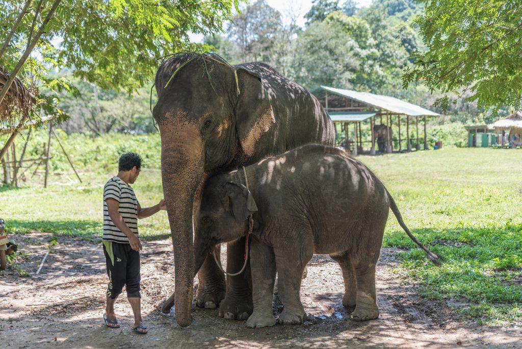 Elephant Sanctuary in Chiang Mai